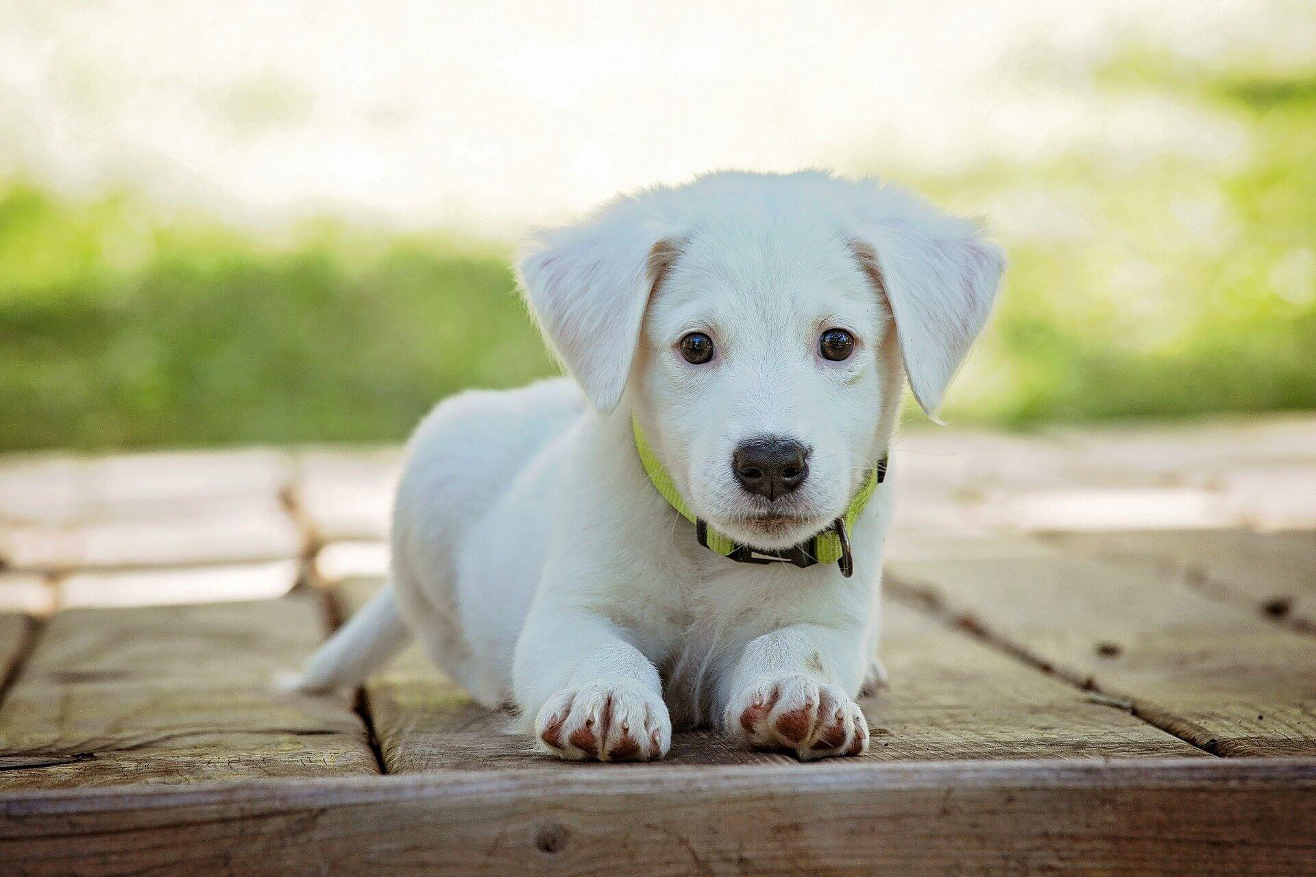 Hunde-OP-Versicherung