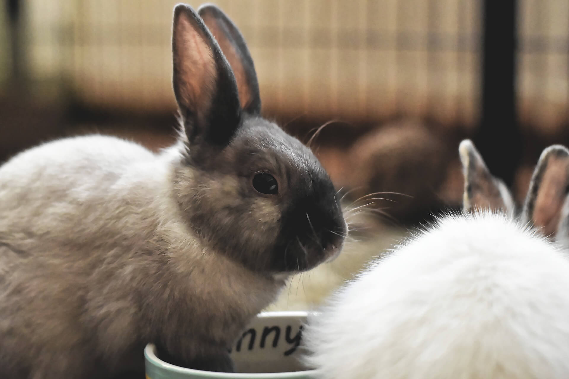Kaninchenversicherung